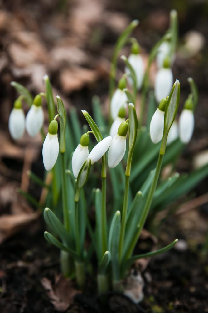 Paprasti pavasariniai džiaugsmai. Pagaliau :)