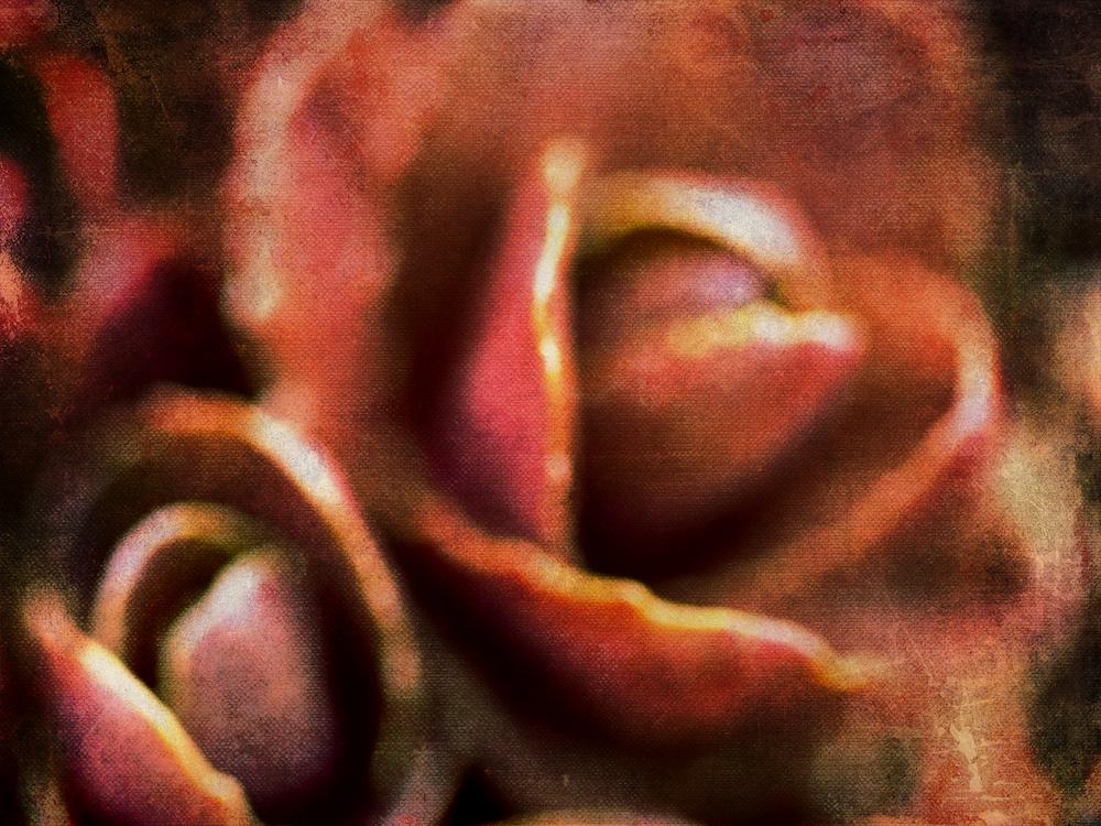 Švelnūs žaidimai. Bandymas tapyti fotografijos sluoksniais. Sedum telephium 'Purple emperor' pumpurai.