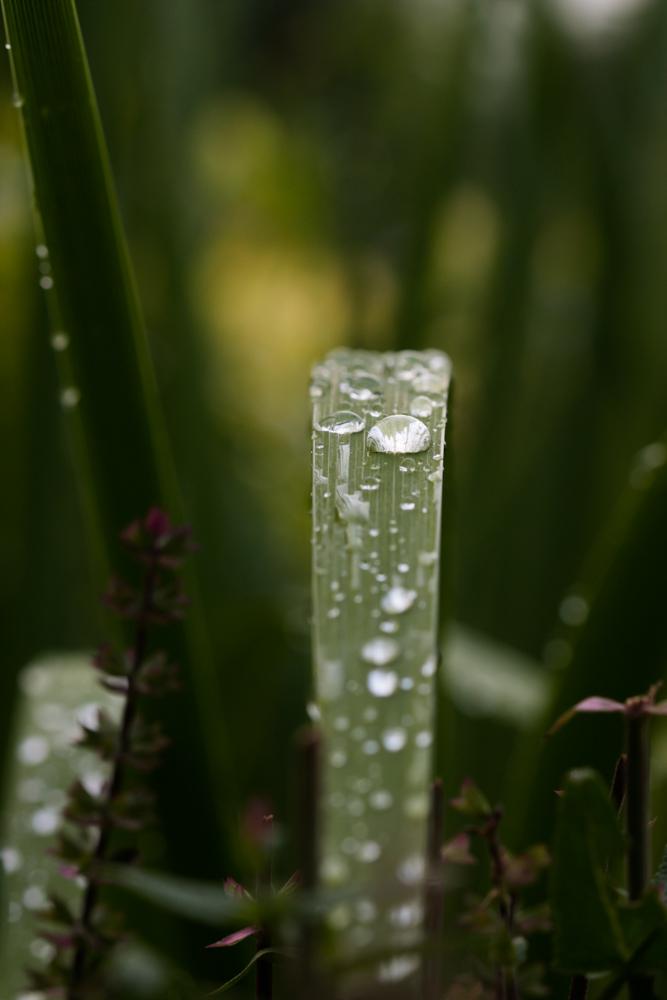Po lietaus