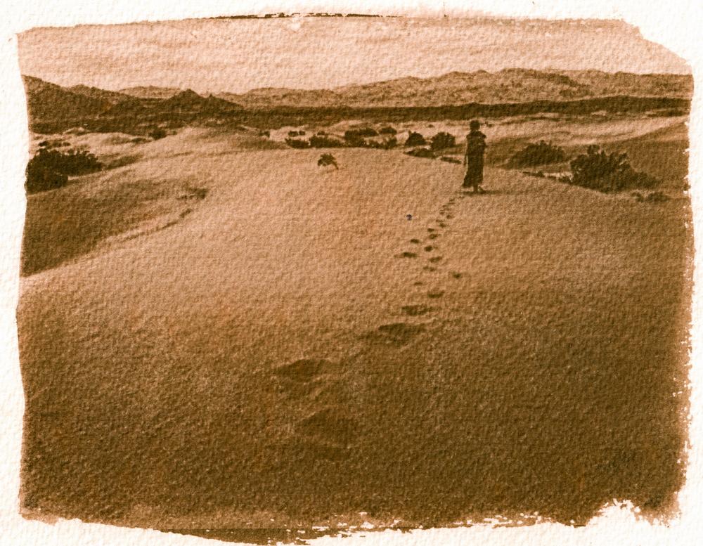 Mesquite smėlio kopos Mirties slėnyje, JAV. Cianotipija, balinta su valgomąja soda ir tonuota vaistažolių arbata.