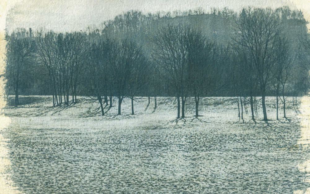 Medžių grafika