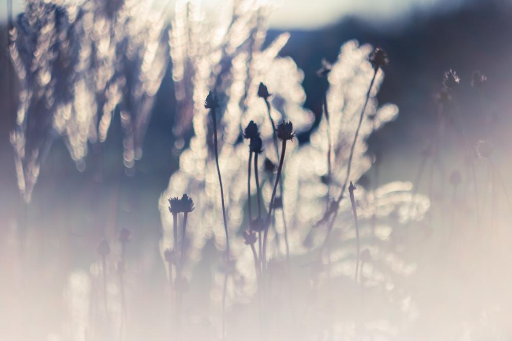 Šaltos šviesos sezonas
