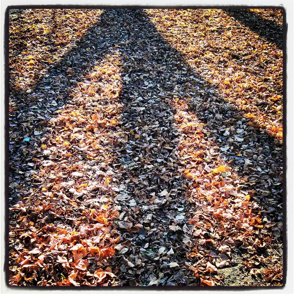 Rodyklė rudens kryptimi