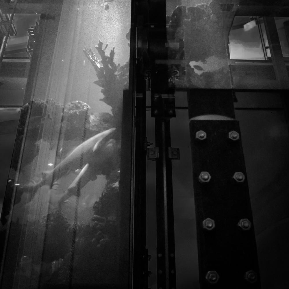 Aukštyn. Atspindžiai lifto stikle. Mobilografija.